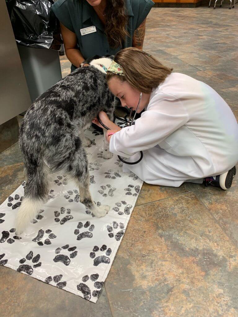 Ultimate Kid Experience: Be A Veterinarian For A Day